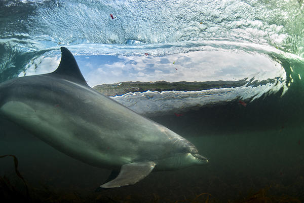 BWPA Coast and Marine and overall Winner - George Karbus for In the Living Room
