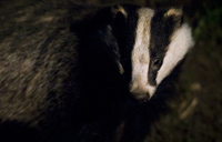 BWPA Documentary Winner - Neil Aldridge for The Alternative