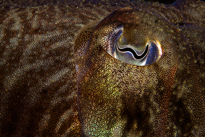 BWPA Natural Details Winner - Michael Gallagher for Cuttlefish Detail