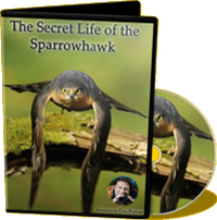 The Secret Life of the Sparrowhawk