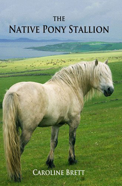 The Native Pony Stallion