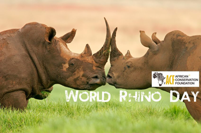 African Conservation Foundation - World Rhino Day